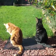 Two beautiful cats who need looking after in Bath!!