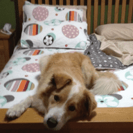 Lovable dog needs temporary Step Parents