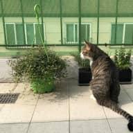 Cat lover needed in Seoul