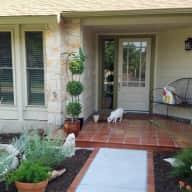 Two Austin kitties seeking caregivers