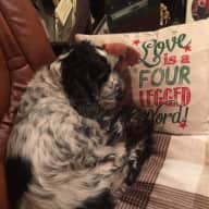 I am looking for an individual or couple to house my fathers house and his 12 year old English cocker spaniel called Harvey.