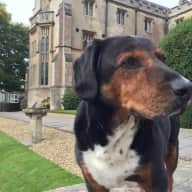 A dog sitter to care for and look after Bryn, who does not like being left alone.  Bryn is slightly blind and a bit deaf.  But otherwise loves life, walks and his food.