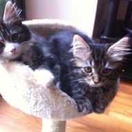 looking for lovely people to look after our cats