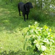 Lovely rural spot in the middle of apple orchards with a gorgeous black Labrador to keep you company! Fishing in lake!!!