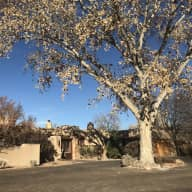 Dog and housesitting in Los Ranchos, NM