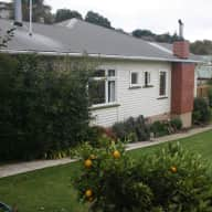 3 bedroom house in suburban Christchurch with 1 small schnauzer dog