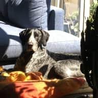 6 Week Pet Sitter Needed for Loving Dog