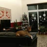 In home dog sitter