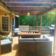 Adorable tiny Maine Coon kitty in sun-filled San Mateo house with private back deck.