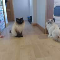 House sit for 3 adorable cats