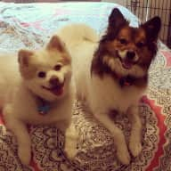 Relaxing vacay in TX with the cutest pups!