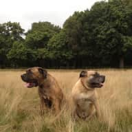 House and Dog Sitter needed for in Battersea