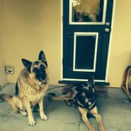 Pet/house sitter for 2 loving dogs.