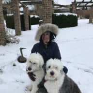 Two adorable Old English sheep dog sisters need caring sitters