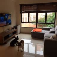 Petsitter needed for 6 days in Hong Kong