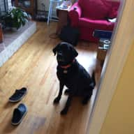 House & Pet sitter needed