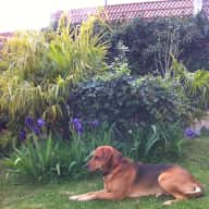 "Dog sit ""Bobby"" for 2 weeks in his village house with river frontage and garden."