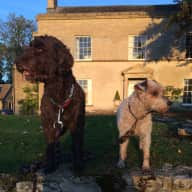 House Sitting in Gloucestershire for Labradoodle and Jack Russell - December 2018