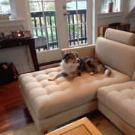 Active Dog and House Sitter in Desirable Vancouver Kits Small House
