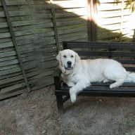 House and pet sitter required for our friendly Golden Retriever and large Farmhouse in Brittany, France