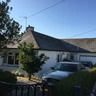 Bungalow in Truro, Cornwall UK with Springer, Labrador cross.