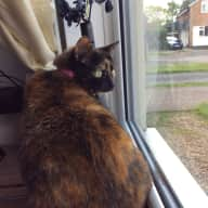 1 week in Cosby, Leicestershire with 2 Cats