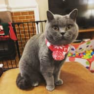 Christmas Cat & House sitter