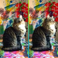 Artist duplex in creative East Williamsburg with two adorable Maine Coons: Darwin & Honeykins