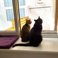Two ferocious (*cough*) cat-women in a cozy two-story apartment in central Vienna
