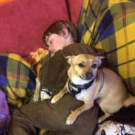 Reliable conscientious friendly dog sitter needed