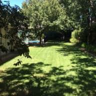 House sitter for 2 older English Springer Spaniels who love their walks
