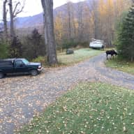 Winter Pet and house sitting on the edge of Alaskan wilderness near Anchorage, Alaska