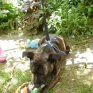 Weekend sit nights, Denby Dale, West Yorkshire,  27th and 28th June