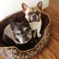 Stunning Location, Home and 2 French Bulldogs seek regular Sitters