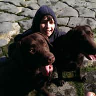 Two relaxed and loving chocolate Labradors need looking after