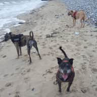 Pembrokeshire National Park ....  800 yards from the sea ..... Dog sitters required for our 3 pooches