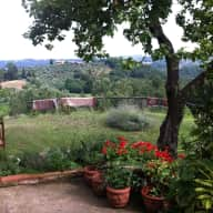 Dog sitter needed for two border collies in our remote Tuscan village.