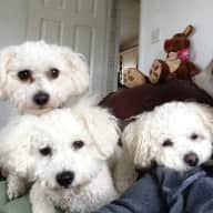 Pet sitter needed for my 3 little guys for the weekend of the 30th September, 2 night stay.