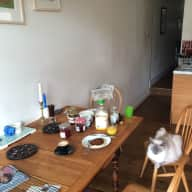Cat sitter needed for two friendly ragdolls
