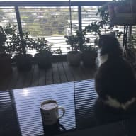 Home in Sydney needing a cat loving sitter
