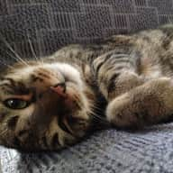 Cat sitter needed for one month in a cosy apartment in Vienna