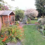 House sitter needed to look after my 2 cats and garden near Swindon