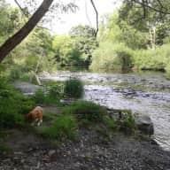 Mini hol in lovely mid Wales! (female sitters please)