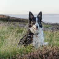 Explore the beautiful Yorkshire Dales with our Border Collie Tipsy ....