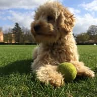 House and dog sitter needed in Cambridge (central, by river and parks) for 10 days in July 2018