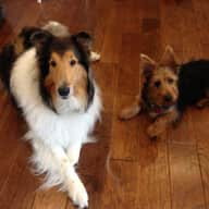 Pet Sitter/ House Sitter needed for 1 week in Barrie