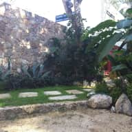 Sitter for pets in luxurious jungle home in beautiful Tulum, Mexico