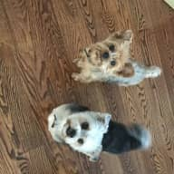 Needing an animal lover to care for my fur babies. :)