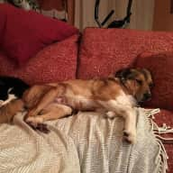 House sitters for friendly dog & timid cat