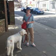 dog and house sitter needed for 1 week from 26th March to 2nd April 2016 in Shoreham by Sea